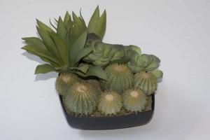 cactus-centerpiece-rent-vancouver